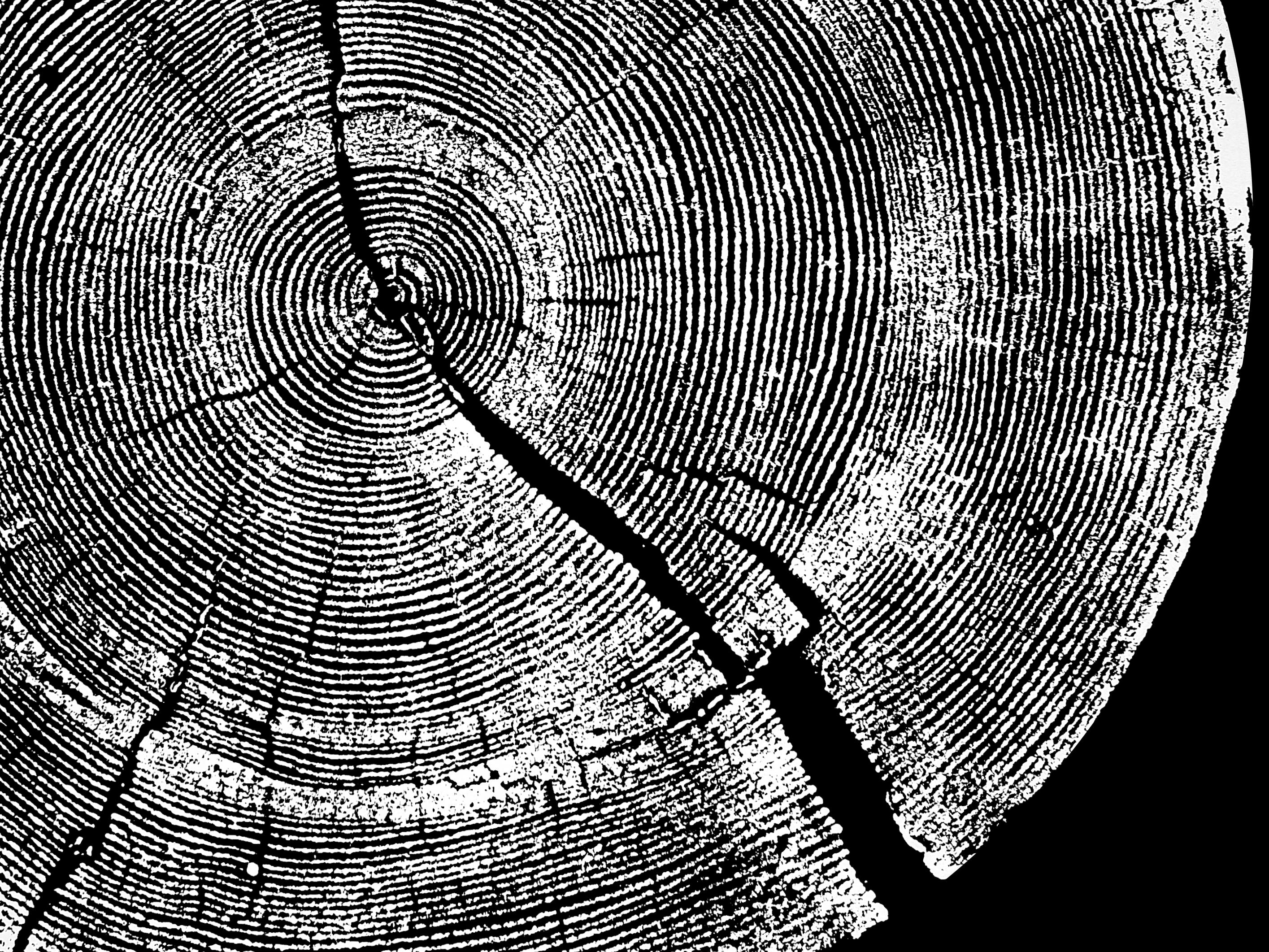 圖:《長路》舞作主視覺(樹的年輪)